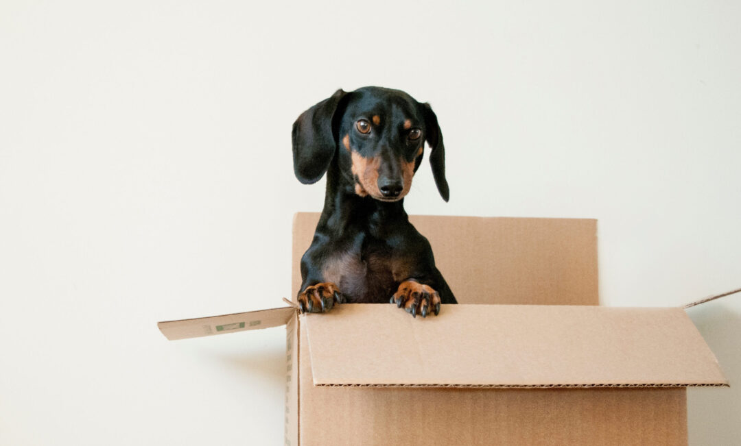Pet Friendly Apartments and How to Leverage to Prospects